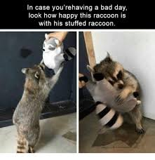 Raccoon Excellent Meme - 25 best memes about raccoon raccoon memes