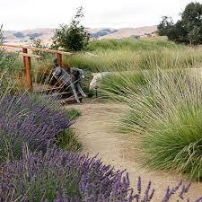 45 best california native landscaping images on pinterest garden