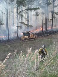 Mississippi forest images Prescribed burning short course mississippi forestry commission jpg