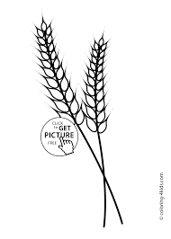 nature wheat coloring page for kids printable free coloing