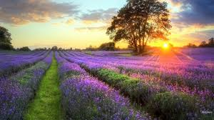 Landscape Flower Garden by Fragrant Tag Wallpapers Page 2 Fragrant Pathway Flowers Aoutdoors