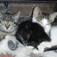 Creature Comforts Pet Sitting Sue U0027s Creature Comforts Pet Sitting 7763 Newell Rd Sodus Ny