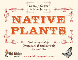 plants native to new jersey upcoming events wild ridge plants u2013 spring open greenhouse