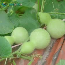get cheap ornamental small gourd seeds aliexpress