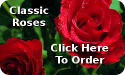 bulk carnations wholesale carnations we service wholesale carnations nationwide