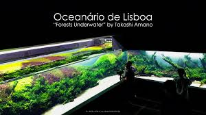 Amano Aquascaping Grand Opening Forests Underwater By Takashi Amano Lisbon