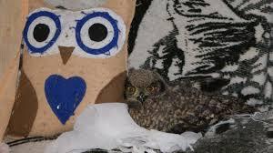 The Barn Owl Carol Stream The Caring Owl Home Facebook