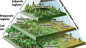 biomes map a pyramid map of the s biomes big think