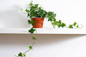 apartment plants best indoor plants for apartments earn spend live