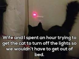 Get Out Of Bed Meme - wife and i spent an hour trying to get the cat to turn off the