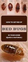 How To Get Rid Of Bed Bugs Yourself Fast How To Get Rid Of Bed Bugs 9 Non Toxic Options Bed Bugs Bites