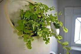 living room succulent wall art indoor living wall planter living