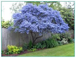 decorative trees for landscaping weeping ornamental trees