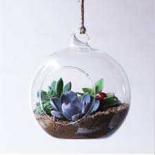 betty store free shipping flat bottom glass globe with one open