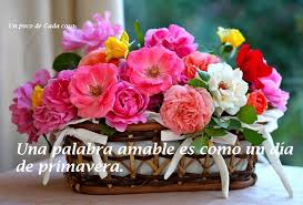 Flowers Salinas - pin by herminia salinas lorenzo on frases pinterest