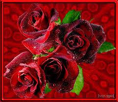 imagenes de amor con rosas animadas imágenes de rosas con movimiento para mi novia