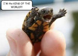 Turtle Meme - turtle king of the world titanic know your meme