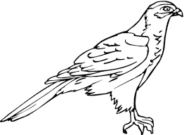 hawk 18 coloring free printable coloring pages