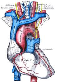 www lessontutor com introduction to the circulatory system