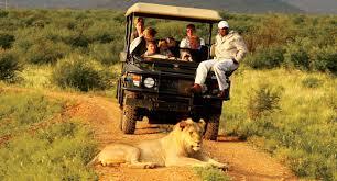 safari uganda safaris uganda safari holiday tour uganda gorilla safaris