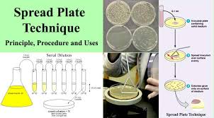 plates that stick to table plate technique principle procedure and uses