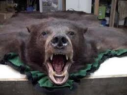 Taxidermy Bear Rug Taxidermy