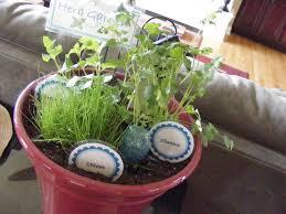 Kitchen Herb Pots by Fresh Kitchen Herbs To Grow Homesfeed