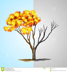 tree half with leaves and half without stock vector image 61010183