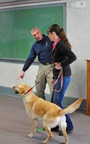 Comfort Dog Certificate Best 25 Therapy Dog Training Ideas On Pinterest Therapy Dogs