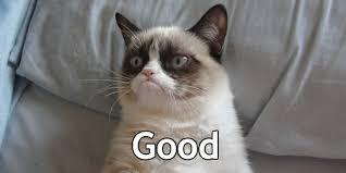 Grumpy Cat Photo 1 Best - image grumpy cat good jpg gta wiki fandom powered by wikia