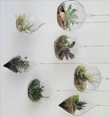 23 best terrarium images on pinterest terrarium ideas