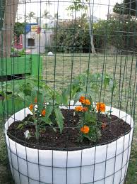Strawberry Garden Beds Structures Grow O U0027ahu