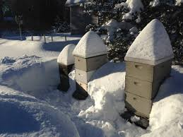 bee hive winter 2015 inspection notes u2013 2 out of 3 are well 1 may