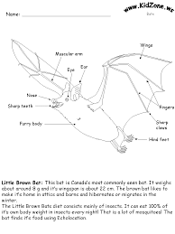 http www kidzone ws images changed bats batlabel1 gif montezuma