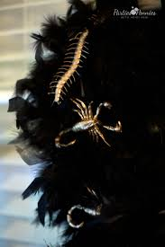 black feather wreath halloween beetlejuice halloween party parties for pennies
