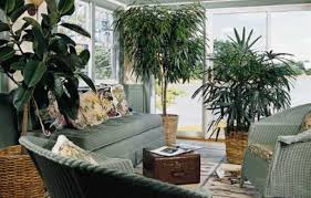 easy houseplants this old house