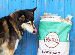 have you checked your dog food ingredients lately with our best