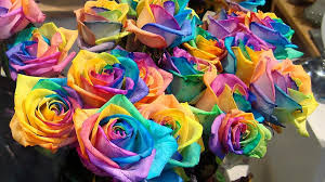 Blue Roses For Sale Here U0027s What Your Cupid Is Buying Online For Valentine U0027s Day Yes