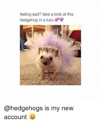 Hedgehog Meme - feeling sad take a look at this hedgehog in a tutu y is my new