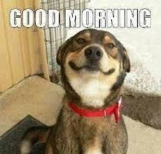 Good Morning Funny Meme - cute and funny good morning meme good morning meme