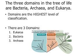 evolution part 3 phylogeny u0026 classification ppt video online