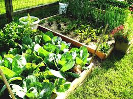 unique vegetable garden ideas for spring design with container