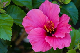 list of ornamental flowers hunker