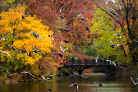 the best places to see fall colors in central park