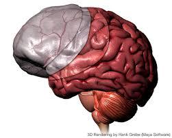 3d Head Anatomy Hank Grebe 3d Illustrations
