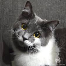 cats of instagram daily doses of original cute cat photos