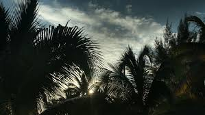 timelapse of palm trees at sunset mexican caribbean coast