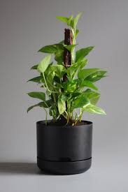 mr kitly x decor selfwatering plant pot 250mm the third row
