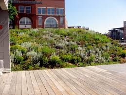 roof garden design home clipgoo green roofs rooftop gardens on