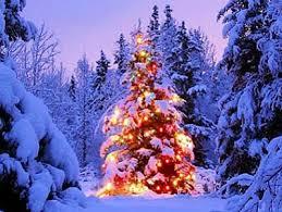 over the counter christmas tree tags for sale grand canyon news
